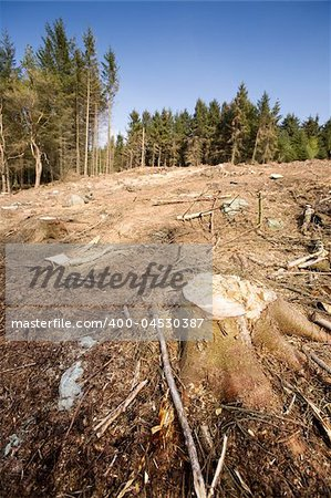 A forest with the trees cut down Stock Photo - Budget Royalty-Free, Image code: 400-04530387