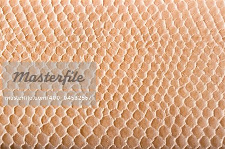 Crocodile skin texture close up Stock Photo - Budget Royalty-Free, Image code: 400-04532557