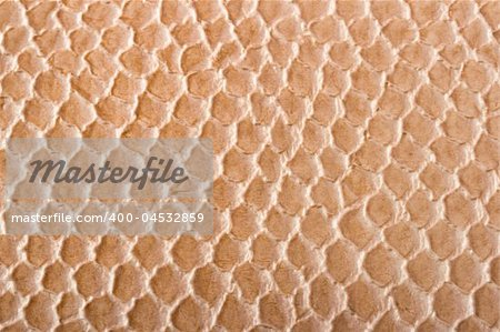 Crocodile skin texture close up Stock Photo - Budget Royalty-Free, Image code: 400-04532859