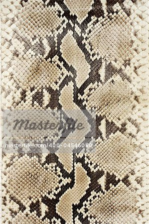Snake skin leather close-up. Stock Photo - Budget Royalty-Free, Image code: 400-04546060