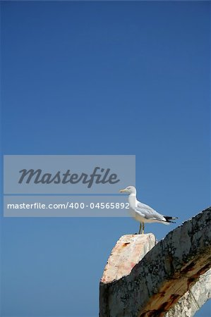 Gull on Black sea, Bulgaria Stock Photo - Budget Royalty-Free, Image code: 400-04565892
