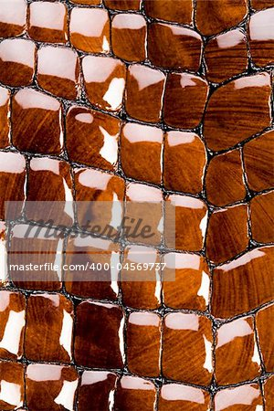 Snakeskin texture - leather background Stock Photo - Budget Royalty-Free, Image code: 400-04569737