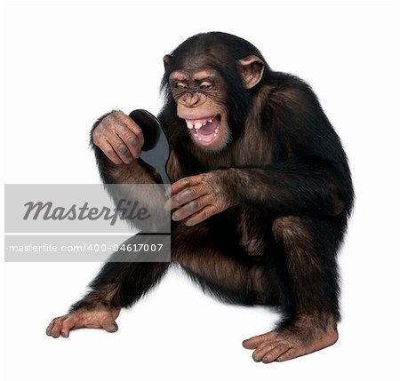 Young Chimpanzee looking himself at the mirror in front of a white background Stock Photo - Budget Royalty-Free, Image code: 400-04617007