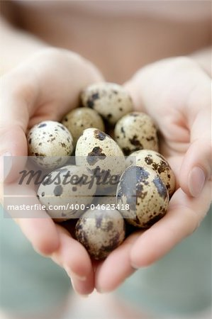 Woman hands holding fragile quail eggs, newborn care metaphor Stock Photo - Budget Royalty-Free, Image code: 400-04623418