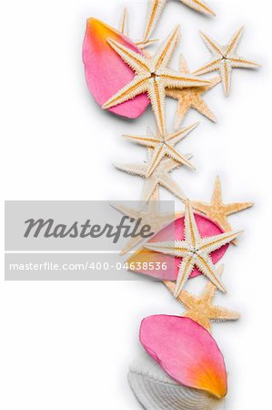 Starfish and pink frangipani petals over a white background