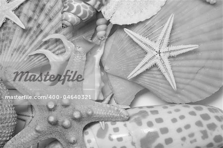 Assorted seashells in very soft light and in mono