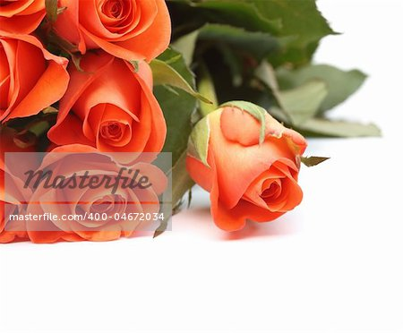 Bouquet of orange roses isolated on a white background with copyspace Stock Photo - Budget Royalty-Free, Image code: 400-04672034