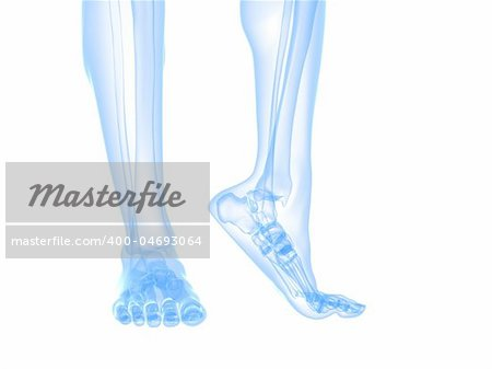 3d rendered illustration of transparent foots with healthy ankles Stock Photo - Budget Royalty-Free, Image code: 400-04693064