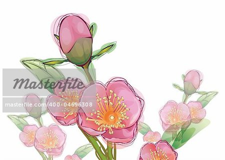 illustration drawing of pink sakura flower in a white background