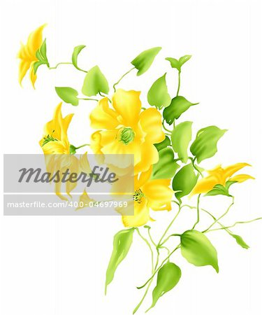 some beautiful yellow flowers  in a white background
