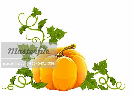 ripe orange pumpkin vegetable with green leaves vector illustration, isolated on white background