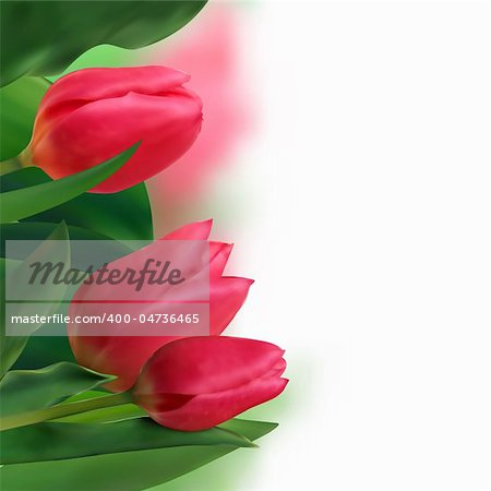 Bouquet of tulips on a white background. EPS 8 vector file included Stock Photo - Budget Royalty-Free, Image code: 400-04736465