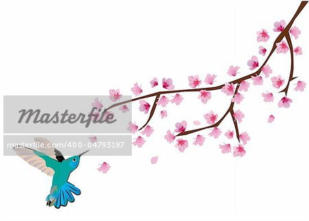 vector illustration of cherry blossom with humming bird