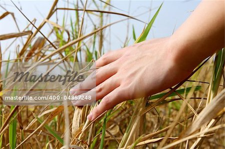 close up of a man's hand touching the grass, 'feeling nature Stock Photo - Budget Royalty-Free, Image code: 400-04857248