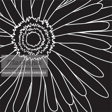 Vector illustration of white drawing gerbera on a black background