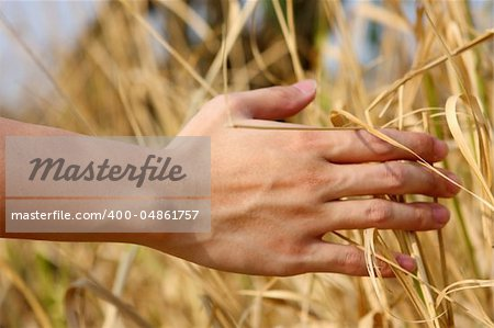 close up of a man's hand touching the grass, 'feeling nature Stock Photo - Budget Royalty-Free, Image code: 400-04861757