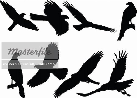 goshawk silhouette collection - vector Stock Photo - Budget Royalty-Free, Image code: 400-04877716
