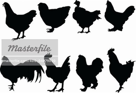 chickens collection - vector Stock Photo - Budget Royalty-Free, Image code: 400-04879020