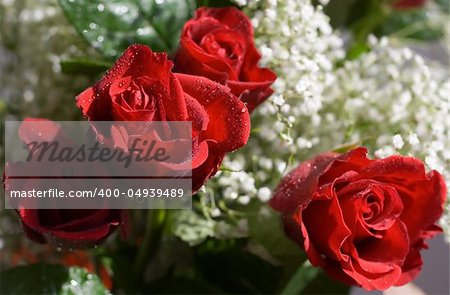 Close-up of red roses Stock Photo - Budget Royalty-Free, Image code: 400-04939489