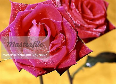 A red rose can put a smile on your face. Stock Photo - Budget Royalty-Free, Image code: 400-04978897