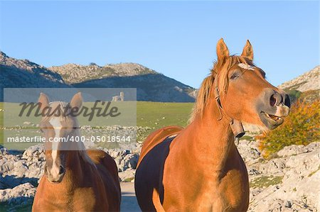 Horses in Mount Lakes Covadonga, Asturias, Spain Stock Photo - Budget Royalty-Free, Image code: 400-05018544