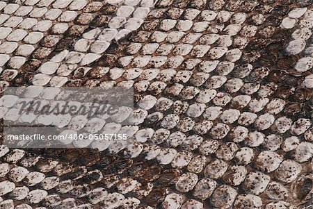 Detail of a real skin of a snake with scales pattern Stock Photo - Budget Royalty-Free, Image code: 400-05057155