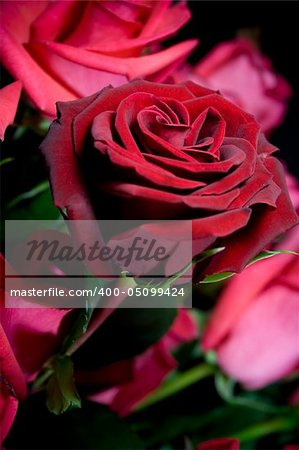 beautiful red roses bouquet closeup Stock Photo - Budget Royalty-Free, Image code: 400-05099424