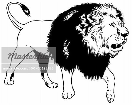 Lion - black outline illustration as vector