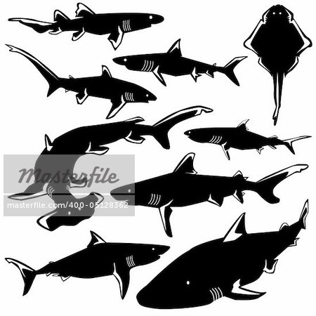 Dangerous sharks in vector silhouette with stylized illustration Stock Photo - Budget Royalty-Free, Image code: 400-05128362