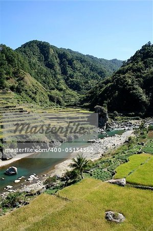 vegetables and rice being grown on steep valey sides of central cordillera northern luzon the philippines Stock Photo - Budget Royalty-Free, Image code: 400-05134352