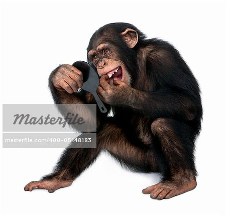 Young Chimpanzee looking at his teeth in a mirror  in front of a white background Stock Photo - Budget Royalty-Free, Image code: 400-05148183