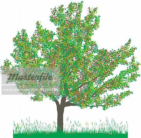 Vector illustration of cherry tree in summer Stock Photo - Budget Royalty-Free, Image code: 400-05200586