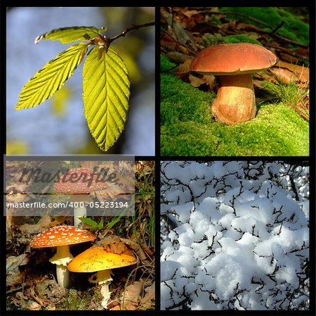 Four season Stock Photo - Budget Royalty-Free, Image code: 400-05223194