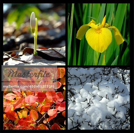 Four season Stock Photo - Budget Royalty-Free, Image code: 400-05223195