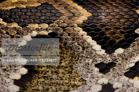 Close-up of Python regius' snakeskin Stock Photo - Budget Royalty-Free, Image code: 400-05237411
