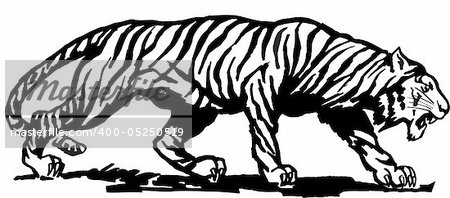Vector abstract illustration. The white predatory tiger. Stock Photo - Budget Royalty-Free, Image code: 400-05250519