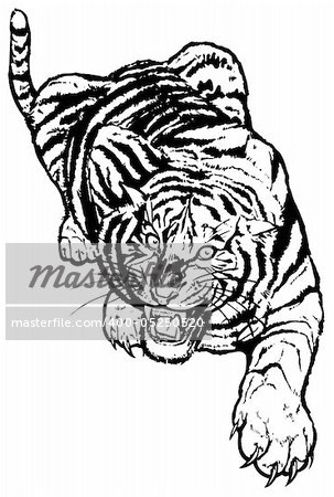 Vector abstract illustration. The white predatory tiger. Stock Photo - Budget Royalty-Free, Image code: 400-05250520