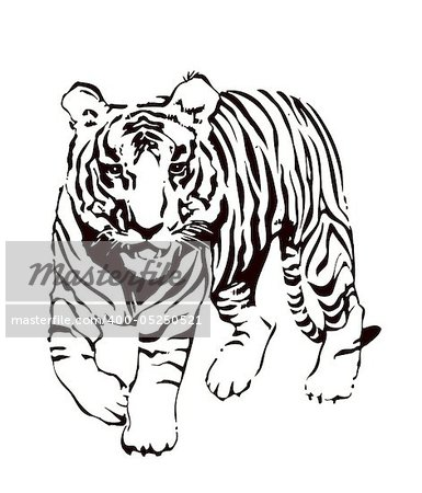 Vector abstract illustration. The white predatory tiger. Stock Photo - Budget Royalty-Free, Image code: 400-05250521