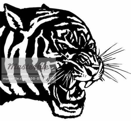 Vector illustration .The white predatory tiger head, Stock Photo - Budget Royalty-Free, Image code: 400-05250523