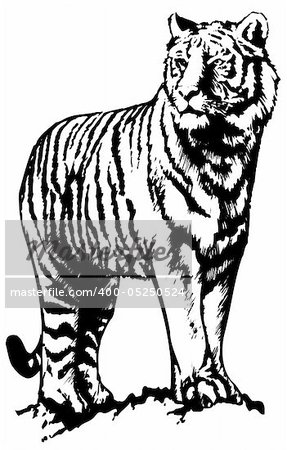 Vector abstract illustration. The white predatory tiger. Stock Photo - Budget Royalty-Free, Image code: 400-05250524