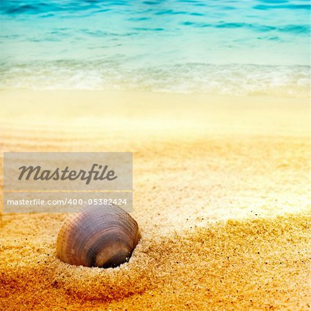 Sea shell background  on fine golden sand with copyspace