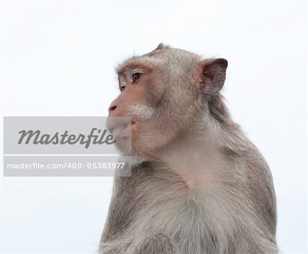 Thailand monkey in chonburi mountain , Eastern of Thailand Stock Photo - Budget Royalty-Free, Image code: 400-05383977