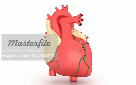 3D heart on a white background