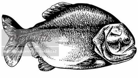 Piranha isolated on white Stock Photo - Budget Royalty-Free, Image code: 400-05666062