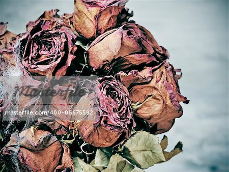 closeup of a dried roses bouquet with spider web