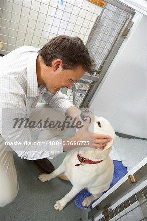 Vet Checking Dog In Pen