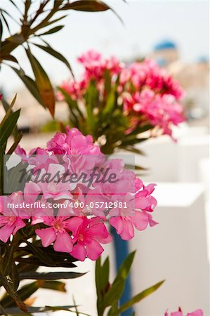 Close-up of pink flowers in Perissa, Santorini, Greece. Church domes in the background. Stock Photo - Royalty-Free, Artist: ElinaManninen, Code: 400-05712981