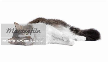 Beautiful cat isolated over white background