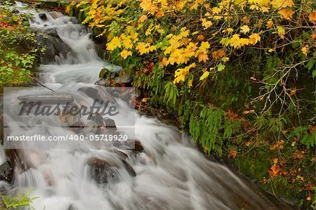 Fall Colors at Wahkeena Falls Waterfall in Columbia River Gorge