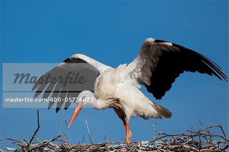 Stork, Vitoria, Alava, Spain Stock Photo - Budget Royalty-Free, Image code: 400-05724023